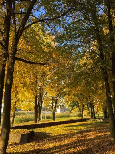 Malbork walk